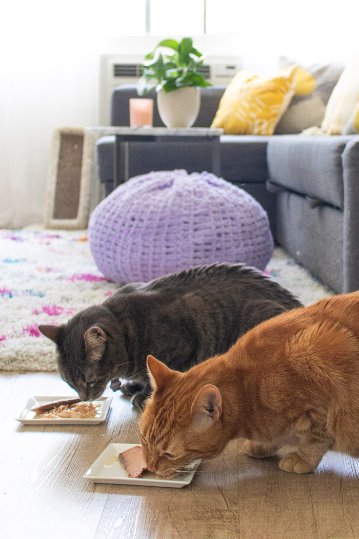 A PAWSitively PURfect Pair: Seeing Myself in My Cat | Club Crafted