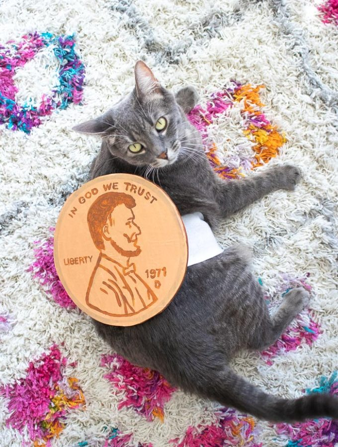 DIY Penny Pet Costume for Halloween   Club Crafted #petcostume