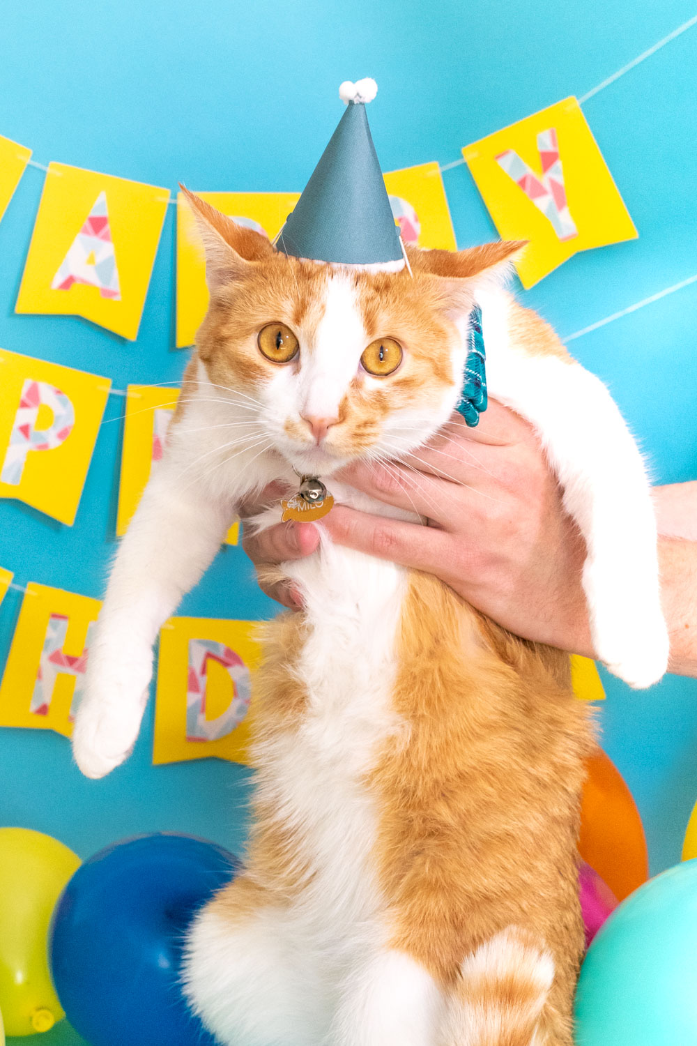 cat wearing party hat in front of banner for birthday party