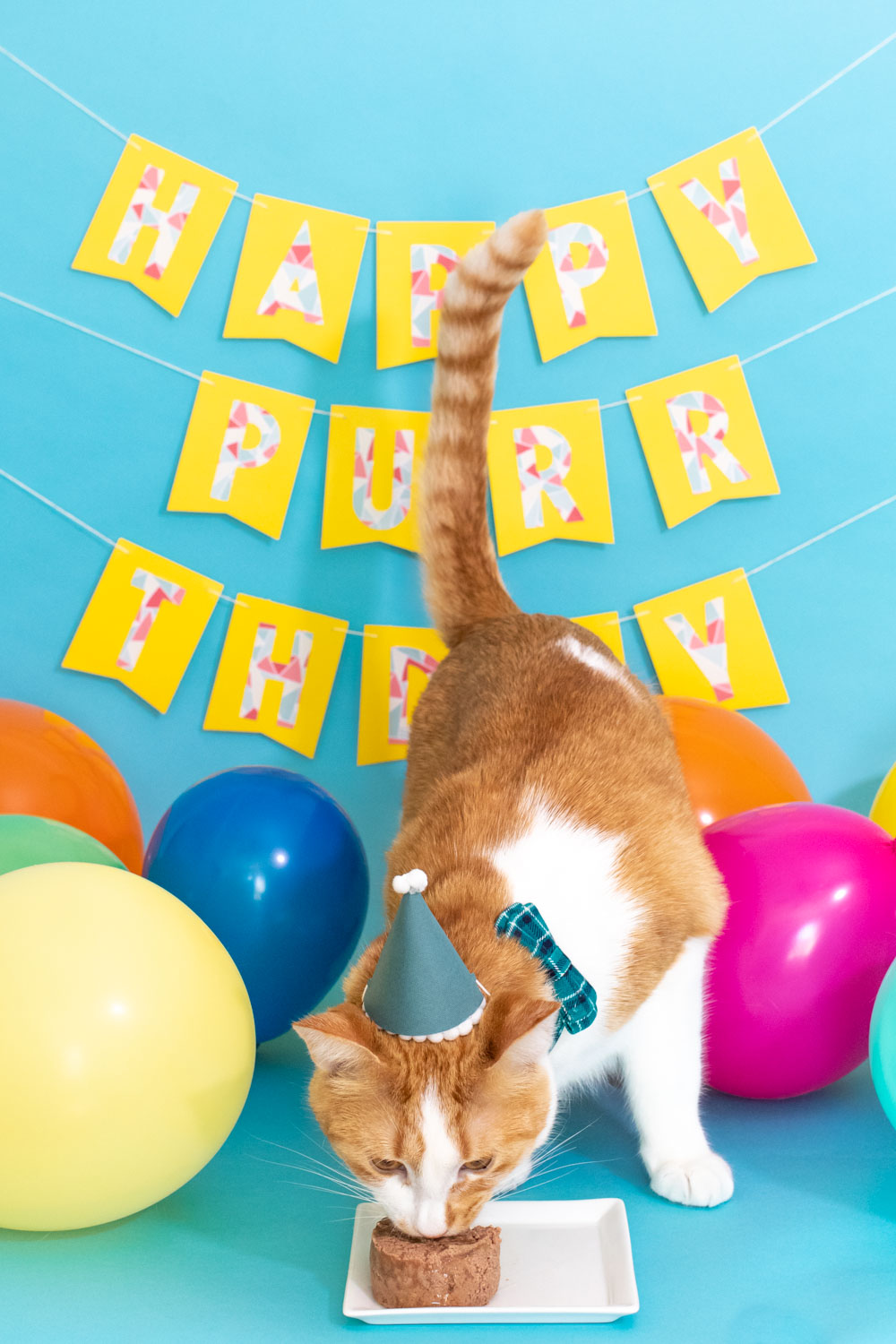 cat eating in mini party hat for cat birthday party